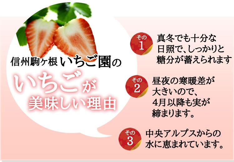 信州駒ヶ根いちご園のいちごが美味しい理由
