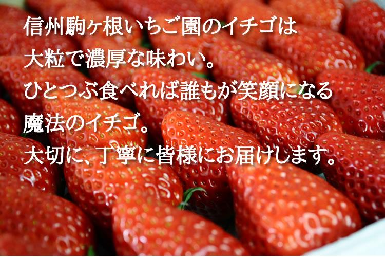 信州駒ヶ根いちご園のイチゴは 大粒で濃厚な味わい。 ひとつぶ食べれば誰もが笑顔になる 魔法のイチゴ。 大切に、丁寧に皆様にお届けします。