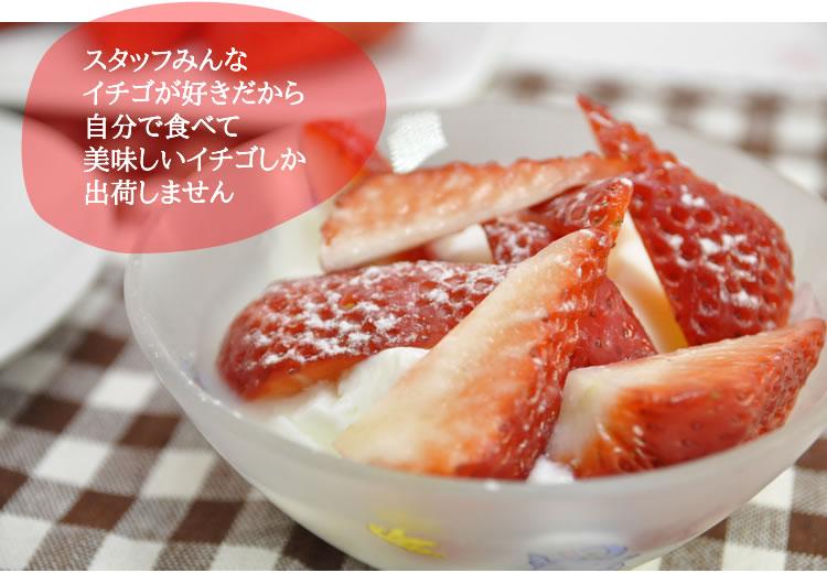 スタッフみんな イチゴが好きだから 自分で食べて 美味しいイチゴしか 出荷しません